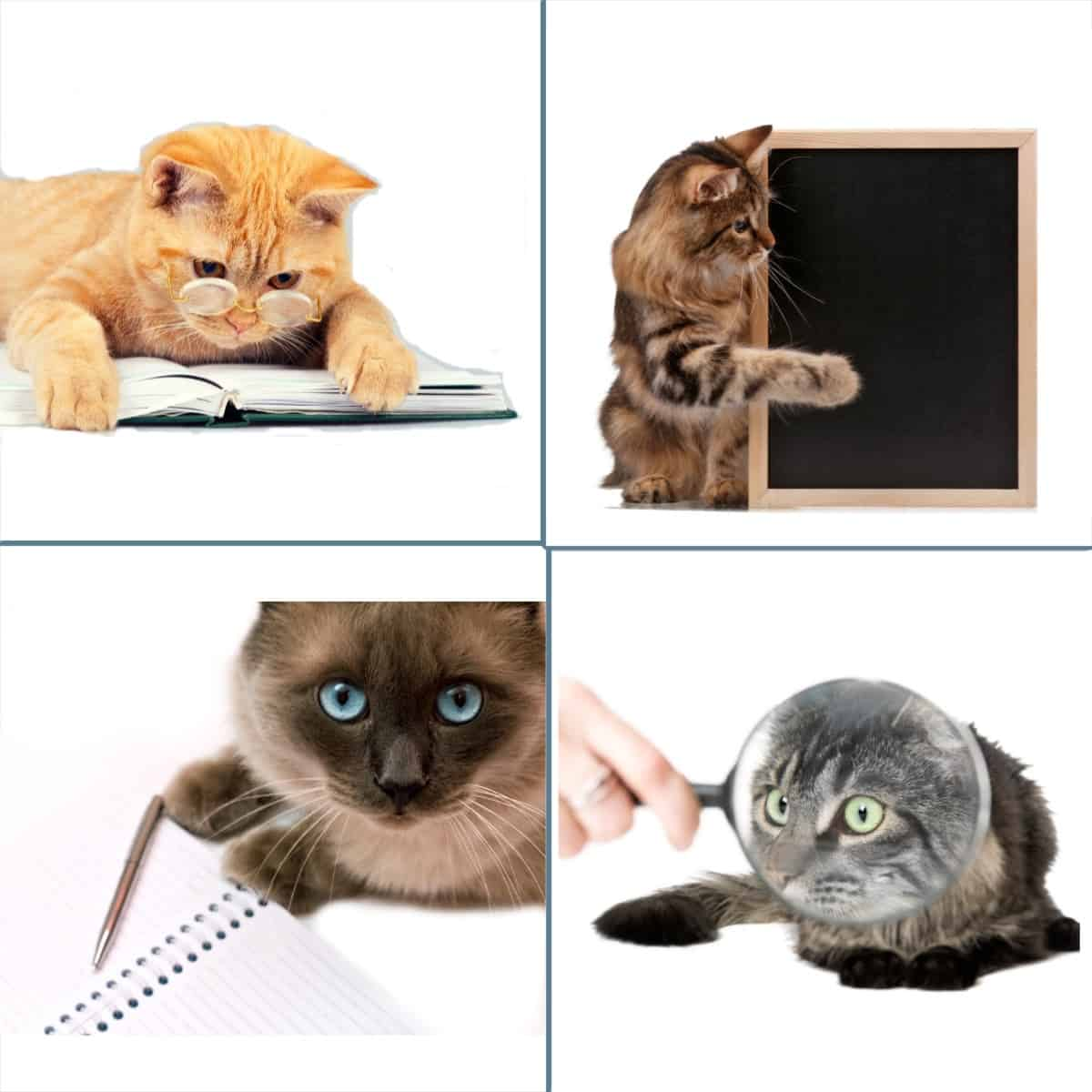 four cats depicting editor profiles